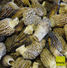 Frozen Morel