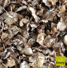 Dried Fairy Ring Mushroom